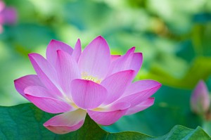 Nirup spiritual mentoring sedona meditation